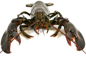Everything You Always Wanted to Know About Lobster